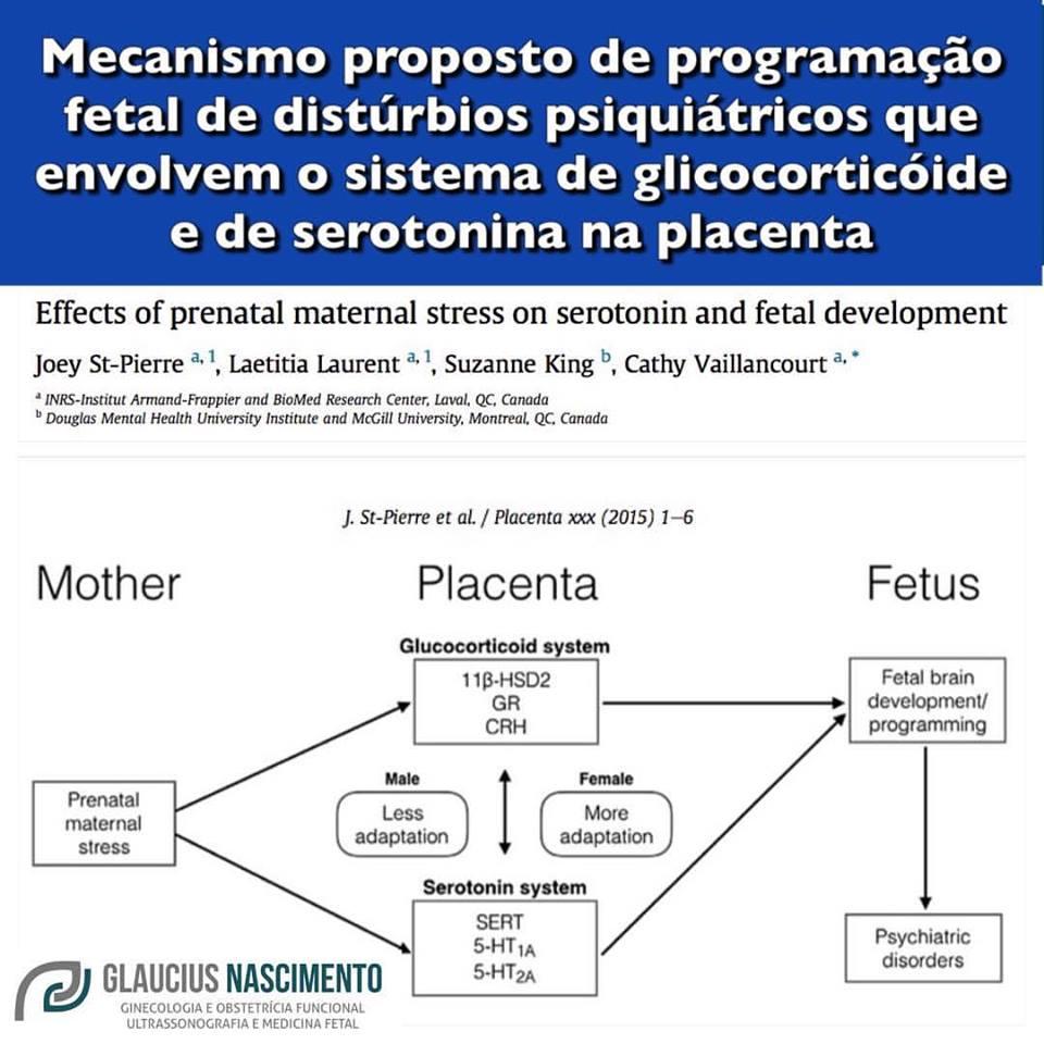 estressegrav1